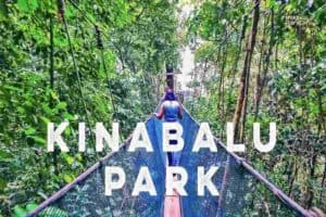KK national park canopy walk